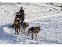 Hundekjøring på Barnas vinterdag