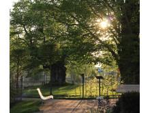 Kvällssol på Astrid Lindgrens Näs