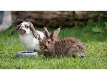 Kaninchen dürfen nicht alleine gehalten werden.
