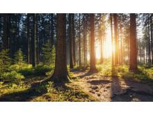 I løbet af 2019 vil dagligvarekæden Lidl plante 100 træer for hver nyåbnet butik i samarbejde med organisationen Plant et Træ. Lidl forventer at åbne 10-15 nye butikker om året de næste år.