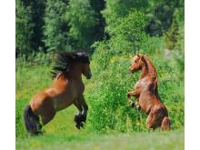 Hästsläpp i Böle