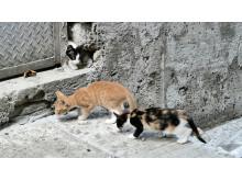 WTG-Weltkatzentag-Bulgarien-Streunerkatzen
