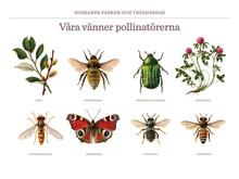 Surrande Parker, en kampanj för våra vänner pollinatörerna