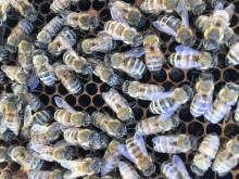 Närbild på bin från Orkla Foods Sveriges huvudkontor