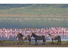 Kenya-shutterstock_50941147