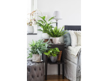 Luftrenande växter