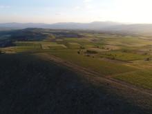 Assyrtiko vineyards