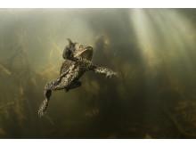 Amphibia – att leva på hoppet. Pressbild 2