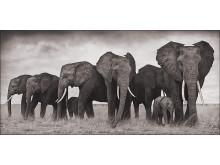 "Nick Brandt: ""Elephants Resting"", Ambroseli 2007."