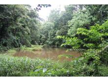 Naturschutzzonen umgeben Teakplantagen