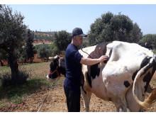 WTG-Syrien-Behandlung-Kuh-2