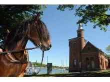 Hästen Lukas trivs på politikerträffen