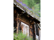 Hütte in Geiranger