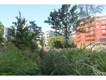 Växtbädd. Bild:Stockholms stad.