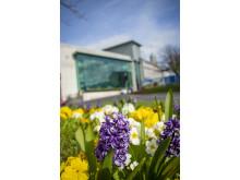 Summer flowers at the Braid, Ballymena.