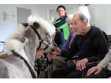 Besøgshestene rummer mange gavnlige effekter for de ældre