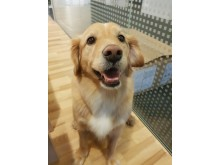 Fredagshunden Pippi