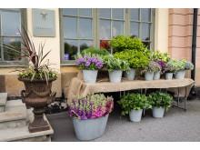 Trädgårdsaktivitet 1