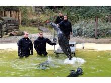 PI-Zoo-DARWINEUM-82-2017_Seehund-Patenschaft_Karsten Pannwitt OSPA_Tim Schmitt Rostocker Robben_Zoo Rostock_Kloock_02