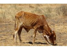 WTG-Nachhaltigkeitsziele-Tierschutz-Rind