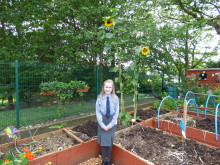 The Tallest Sunflowers in the Borough announced