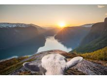 Preisgekrönt: Die Social Media Kampagne #sheepwithaview aus dem Jahr 2016