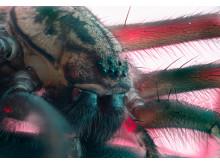 Huonehämähäkki