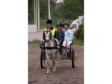 Upplev Häst med Kaspisk häst