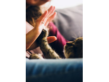 Katt give me five
