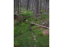 Skogsbäck i Kindla, ett av områdena med integrerad monitoring (IM) i Sverige.