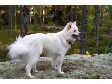 Hund i höstskog
