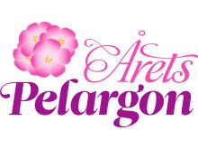 Årets Pelargon