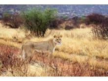 Jambo Safari i Östafrika