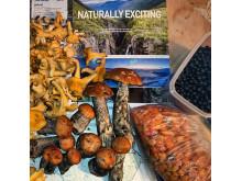 Mushrooms and berries in Lyngenfjord