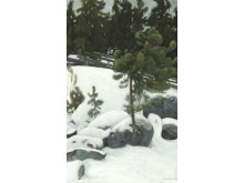 Pekka Halonen: Winter landscape.
