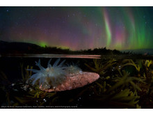 Egor Nikiforov, Open Wildlife, 2018 Sony World Photography Awards with copy