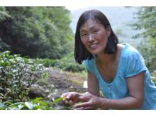 Amanda på teplantage i Wuyishan