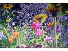 Blick in die Ausstellung - Carolas Garten - Yadegar Asisi (2)