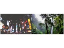 Varumärken i regnskogen