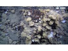 Svampdjur 2000 meter ner