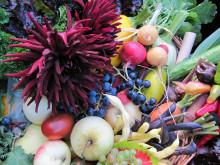 Frukt och räddisor