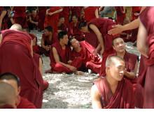 Tibetanska munkar debatterar.