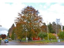 Blodbok på Högstorp i Växjö