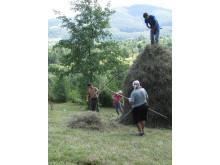 Arbete med hö, Rumänien.
