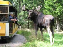 Tåget på Smålandet älgsafari i Markaryd
