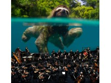 Sloth_Orchestra