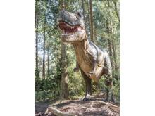 Knuthenborg Safaripark:  Dinosaurier-Wald- Trex2
