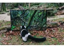 Sony 4K_Lemur