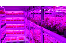 Panasonic's First Indoor Vegetable Farm in Singapore