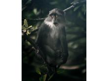 2609_6507_MarcBaechtold_Germany_Open_Wildlife_2018